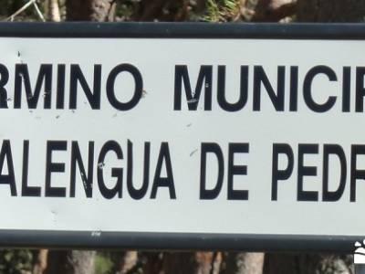 El pinar del Puerto de Navafría; singles madrid;ruta del cares;trekking